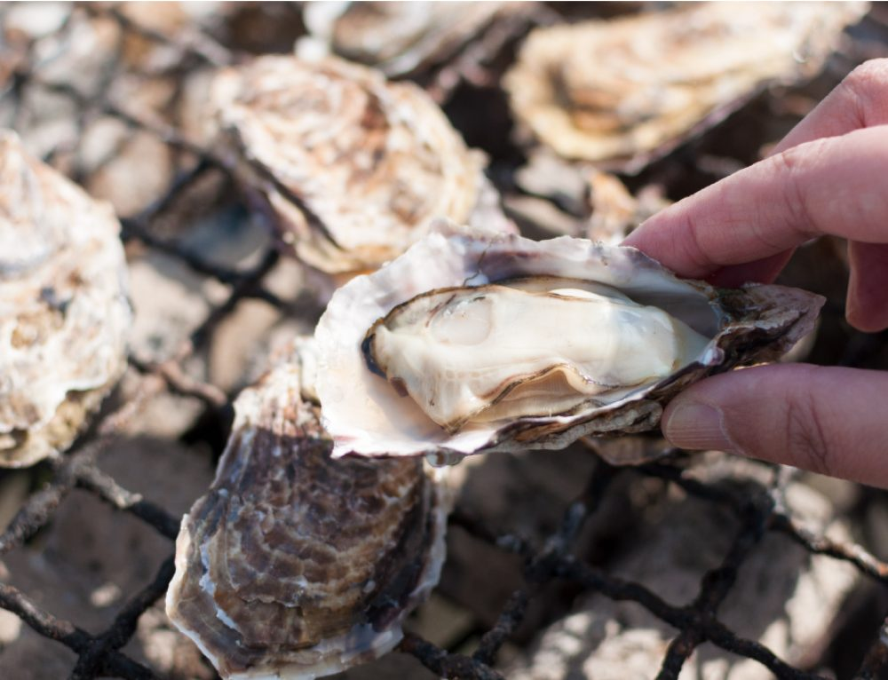 WEB販売サイト『らくうるカート』で日生漁業組合と提携し全国3位達成しました